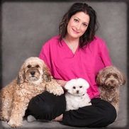 K9EQ Massage Therapy - North York, ON - Alignable