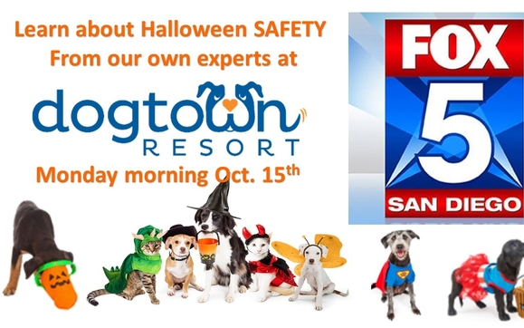 Halloween Safety with Fox5 News by Dogtown Resort in San