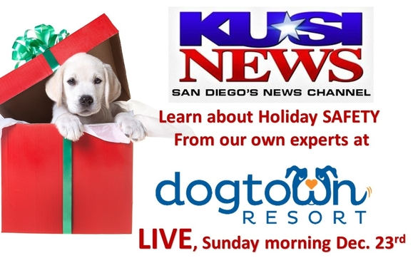 Holiday Pet Safety KUSI Live Dec  23rd by Dogtown Resort in