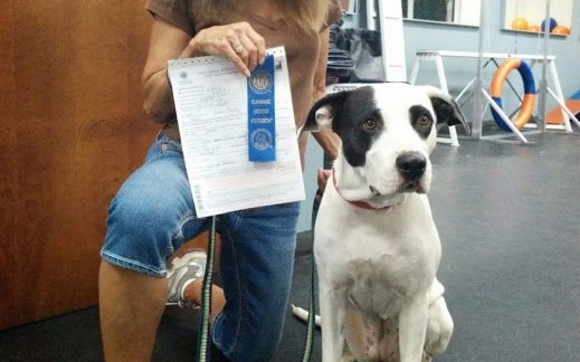 Canine Good Citizen Test by Leaps N' Hounds Dog Training in