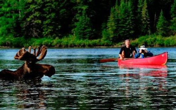 Algonquin Park canoe and dogsled adventures by Voyageur