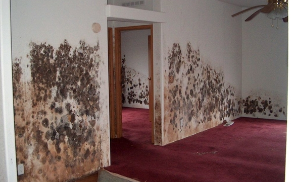 Free Mold & Moisture Inspection by Mold Inspection Services