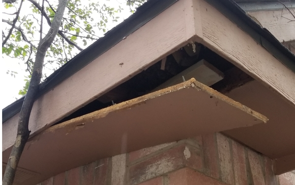 Honey Bee Removal by Gayle Pest & Termite Control in Keller, TX